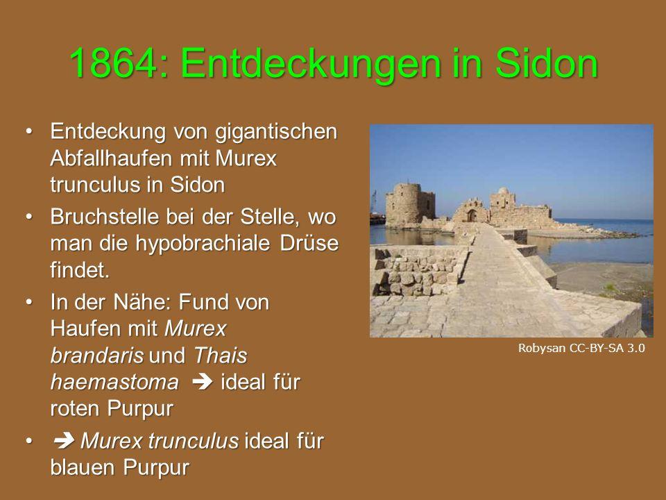 1864: Entdeckungen in Sidon