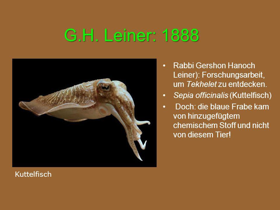 G.H. Leiner: 1888 Rabbi Gershon Hanoch Leiner): Forschungsarbeit, um Tekhelet zu entdecken. Sepia officinalis (Kuttelfisch)
