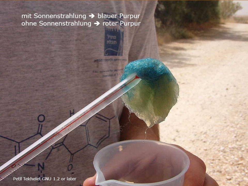 mit Sonnenstrahlung  blauer Purpur