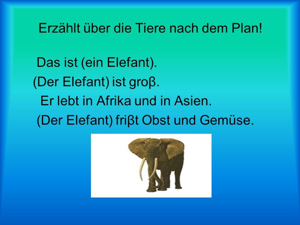 Erzählt über die Tiere nach dem Plan!