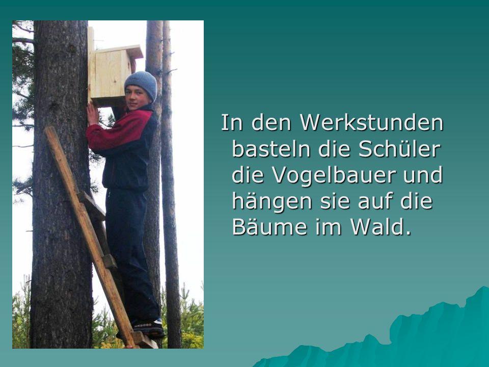 In den Werkstunden basteln die Schüler die Vogelbauer und hängen sie auf die Bäume im Wald.