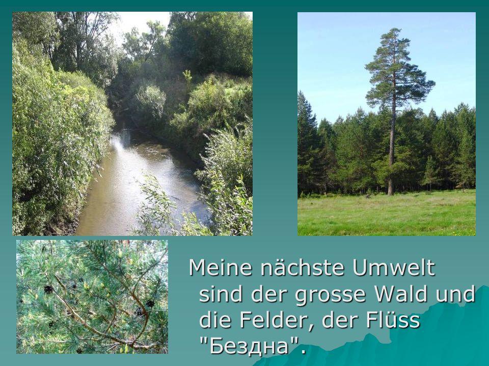 Meine nächste Umwelt sind der grosse Wald und die Felder, der Flüss Бездна .