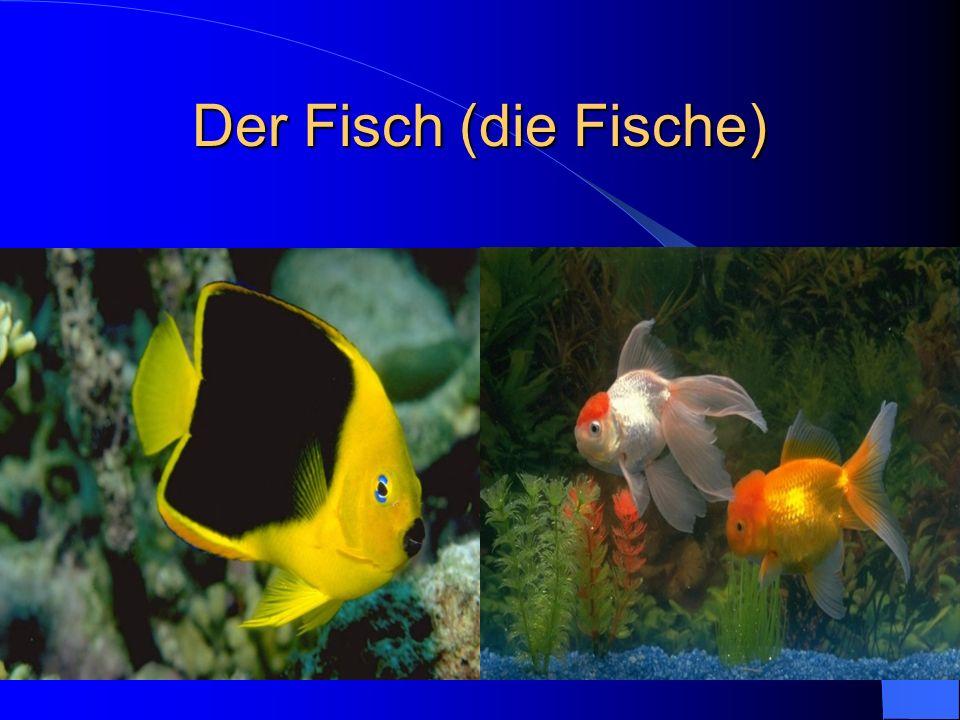Der Fisch (die Fische)