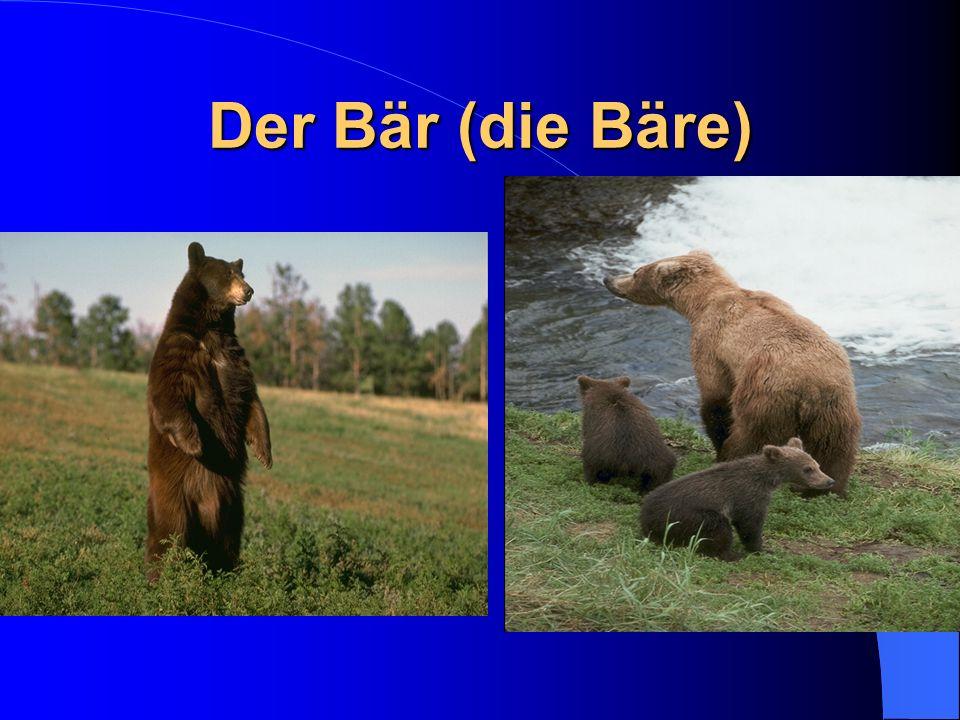 Der Bär (die Bäre)