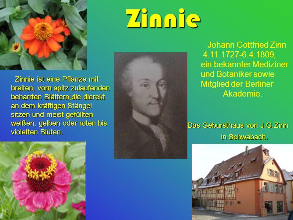 Zinnie Johann Gottfried Zinn 4.11.1727-6.4.1809,