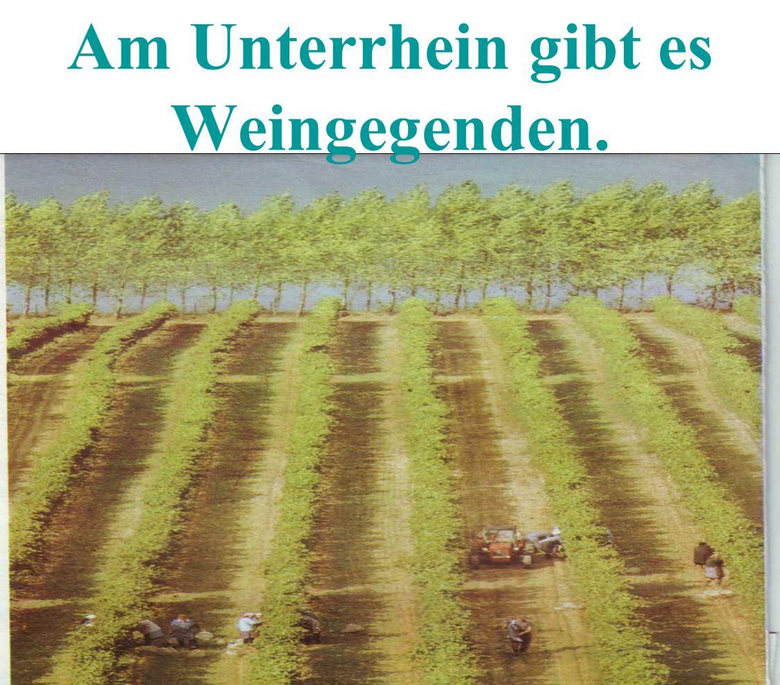Am Unterrhein gibt es Weingegenden.