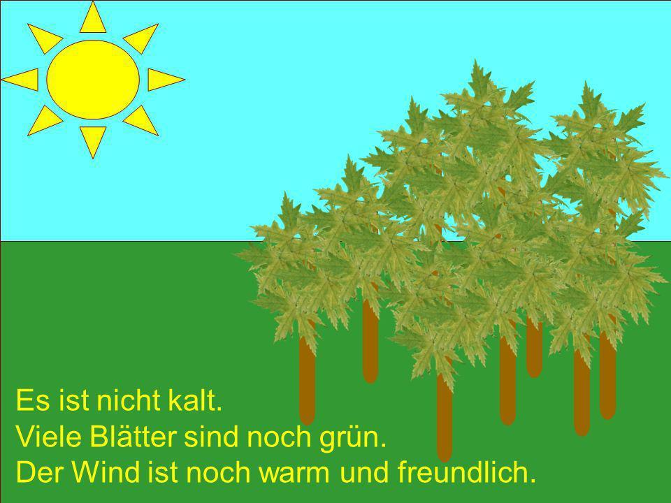Es ist nicht kalt. Viele Blätter sind noch grün. Der Wind ist noch warm und freundlich.