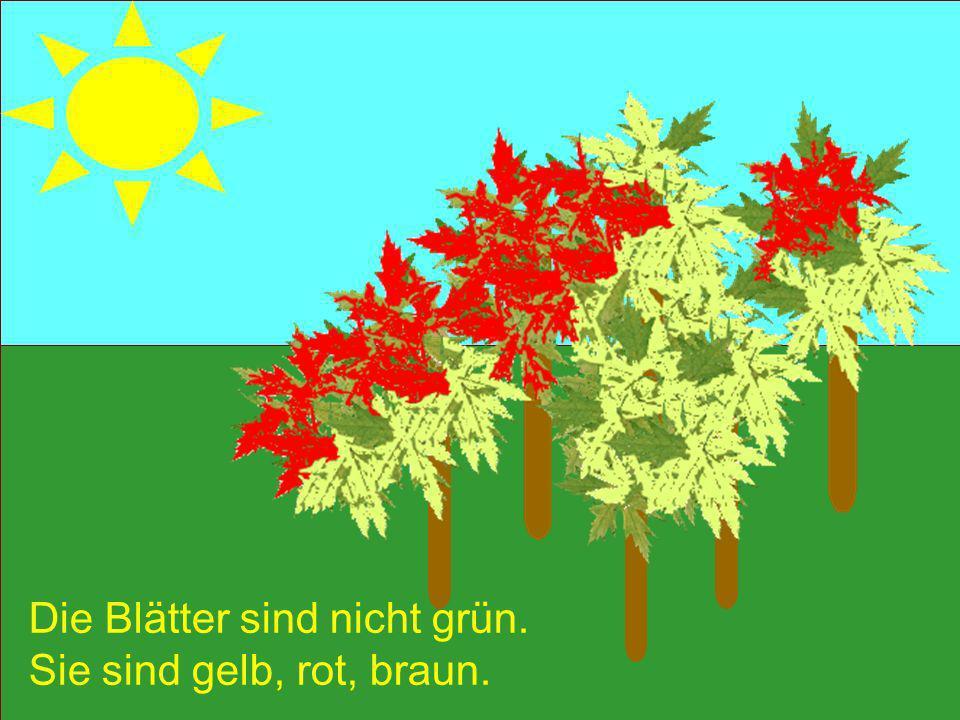 Die Blätter sind nicht grün.