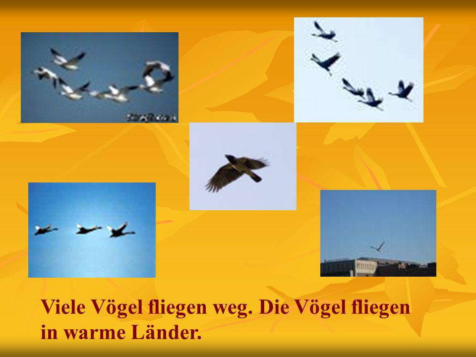 Viele Vögel fliegen weg. Die Vögel fliegen