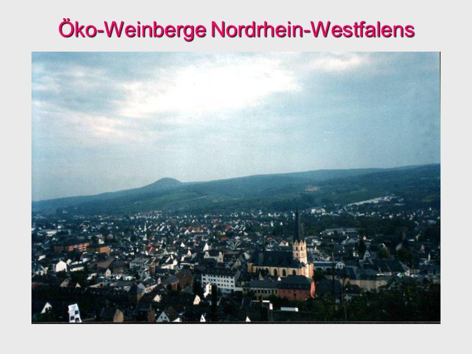 Öko-Weinberge Nordrhein-Westfalens