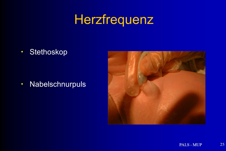Herzfrequenz Stethoskop Nabelschnurpuls Herzgrequenz Stethoskop
