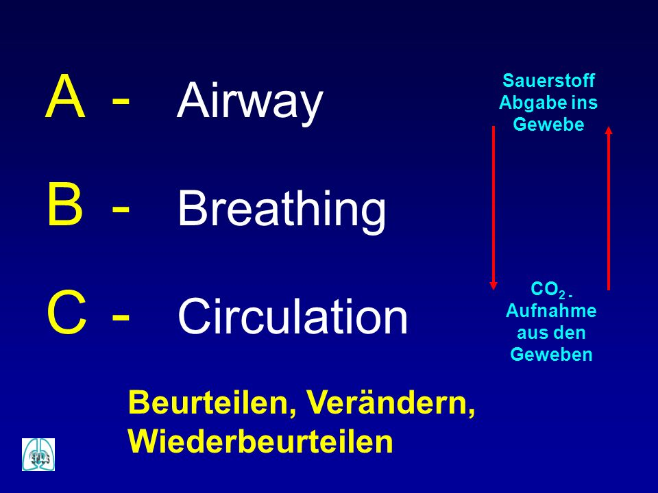 Sauerstoff Abgabe ins Gewebe CO2 -Aufnahme aus den Geweben