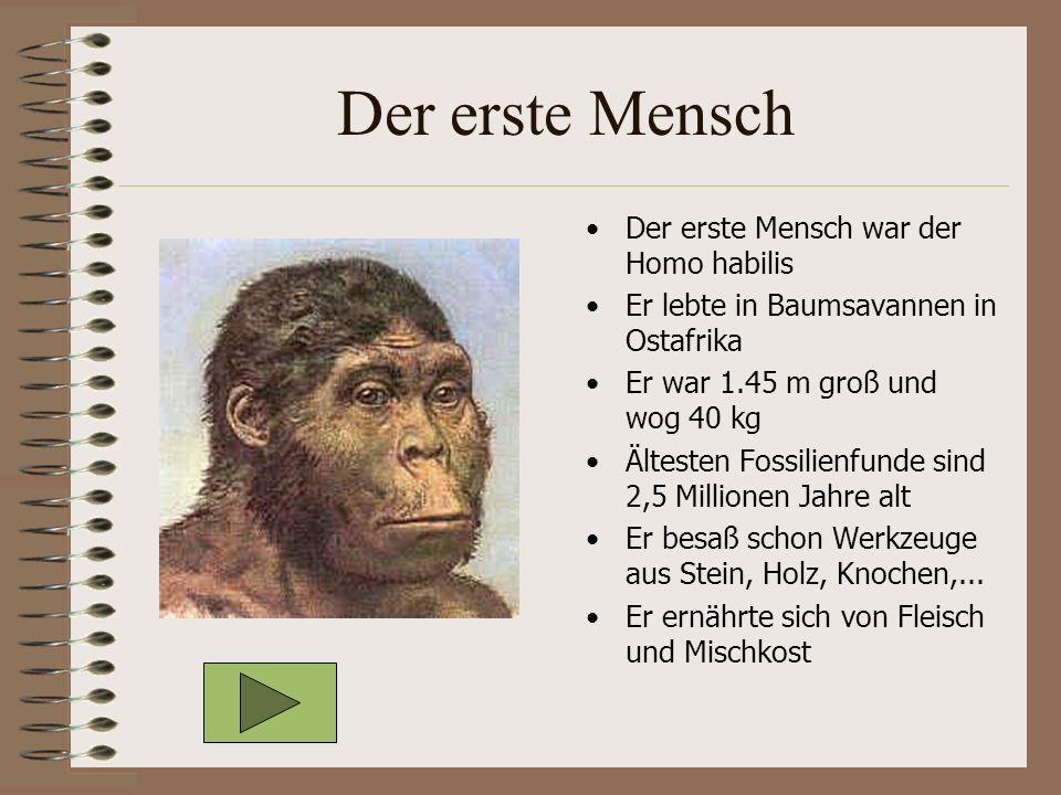 Der erste Mensch Der erste Mensch war der Homo habilis