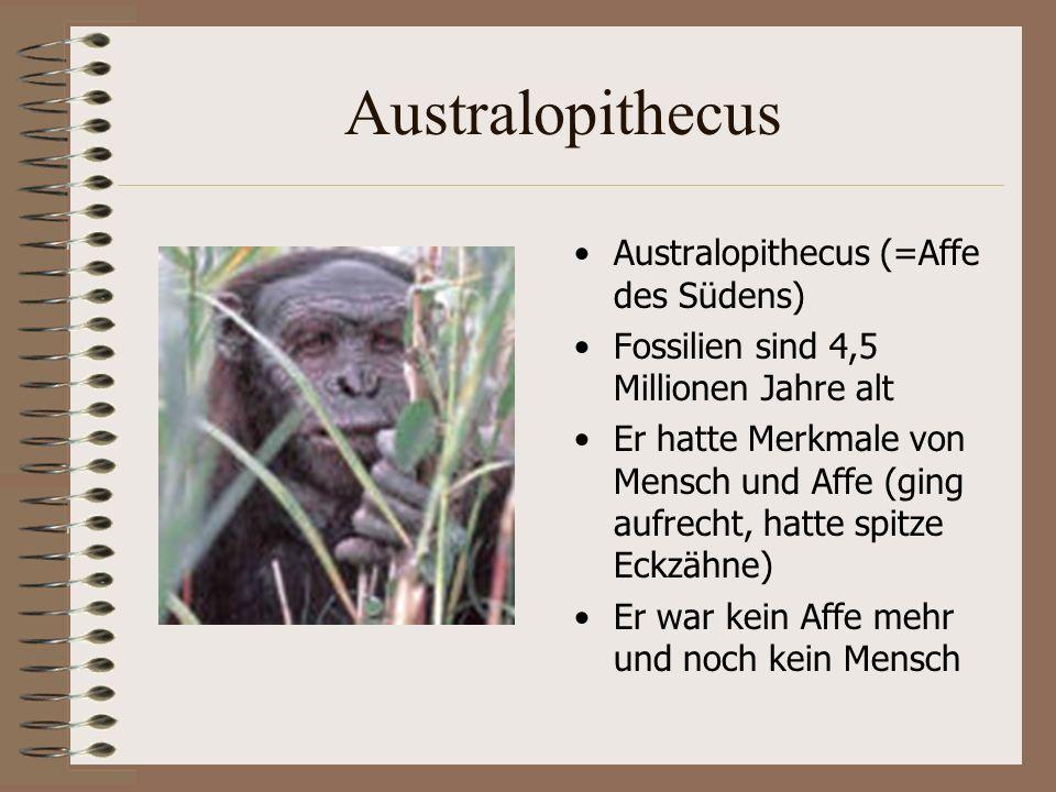 Australopithecus Australopithecus (=Affe des Südens)