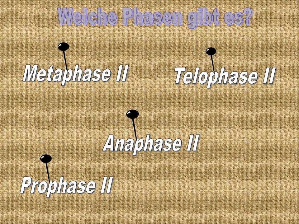 Welche Phasen gibt es Metaphase II Telophase II Anaphase II Prophase II