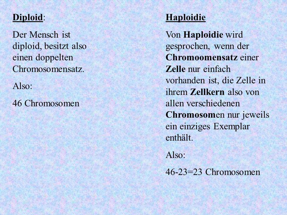 Diploid:Der Mensch ist diploid, besitzt also einen doppelten Chromosomensatz. Also: 46 Chromosomen.