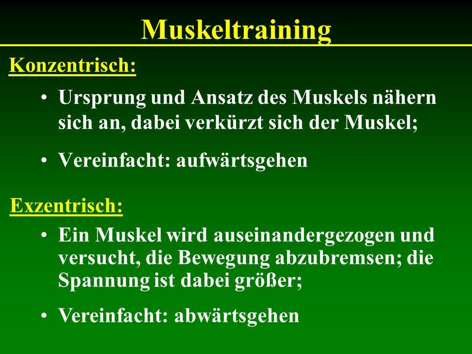 Muskeltraining Konzentrisch:
