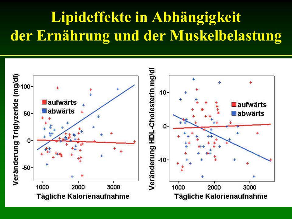 Lipideffekte in Abhängigkeit der Ernährung und der Muskelbelastung