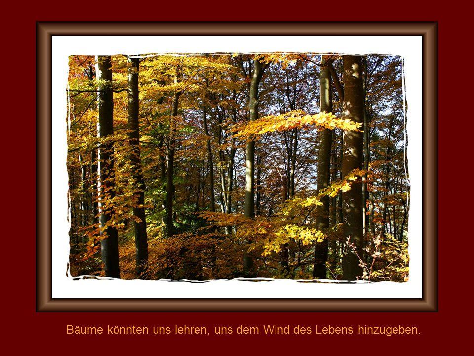 Bäume könnten uns lehren, uns dem Wind des Lebens hinzugeben.