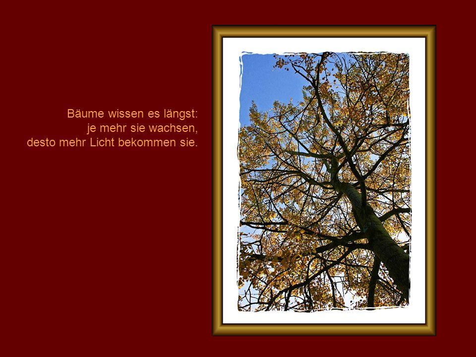 Bäume wissen es längst: je mehr sie wachsen, desto mehr Licht bekommen sie.
