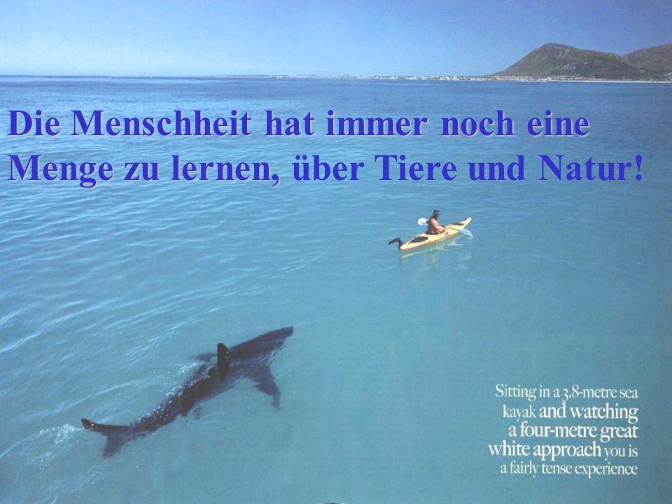 Die Menschheit hat immer noch eine Menge zu lernen, über Tiere und Natur!