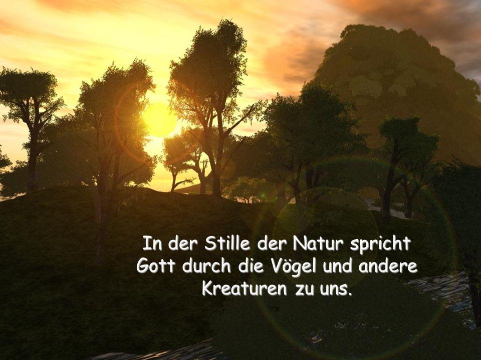 In der Stille der Natur spricht Gott durch die Vögel und andere Kreaturen zu uns.