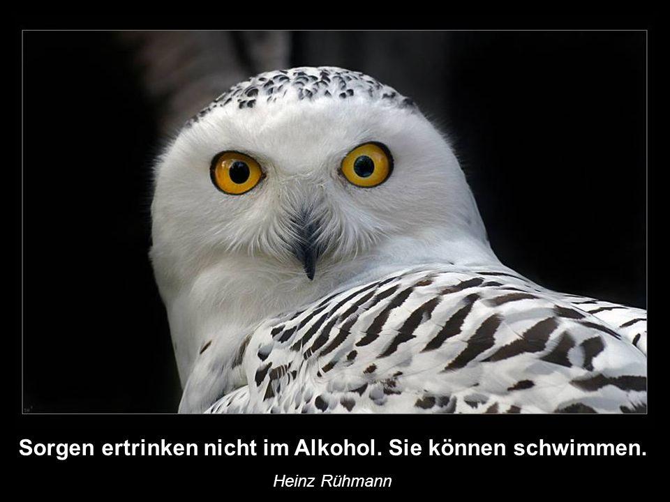 Sorgen ertrinken nicht im Alkohol. Sie können schwimmen.