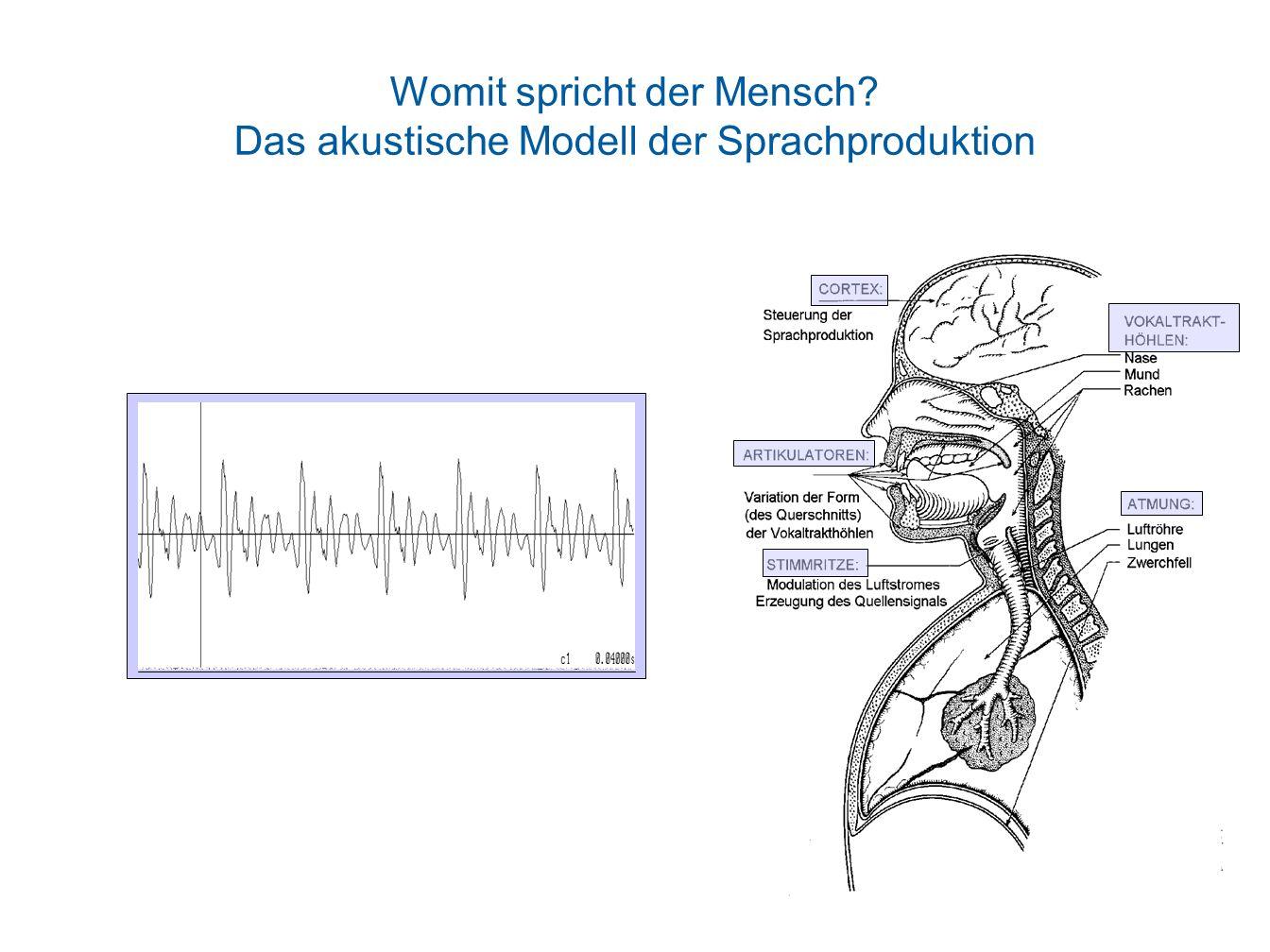 Womit spricht der Mensch Das akustische Modell der Sprachproduktion
