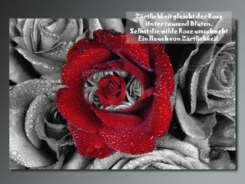 Zärtlichkeit gleicht der Rose Unter tausend Blüten.