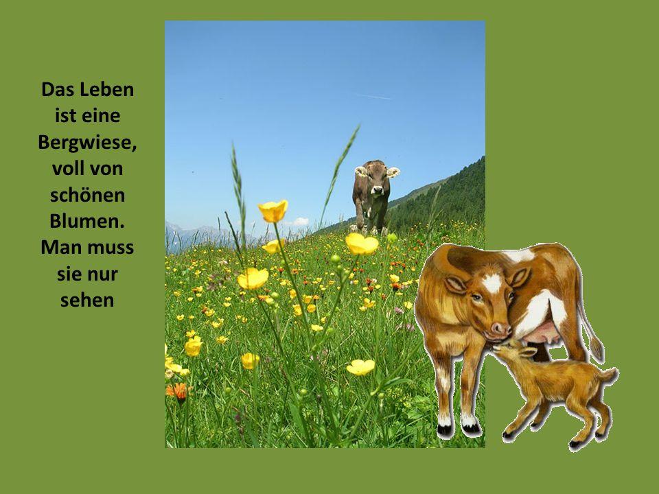 Das Leben ist eine Bergwiese, voll von schönen Blumen