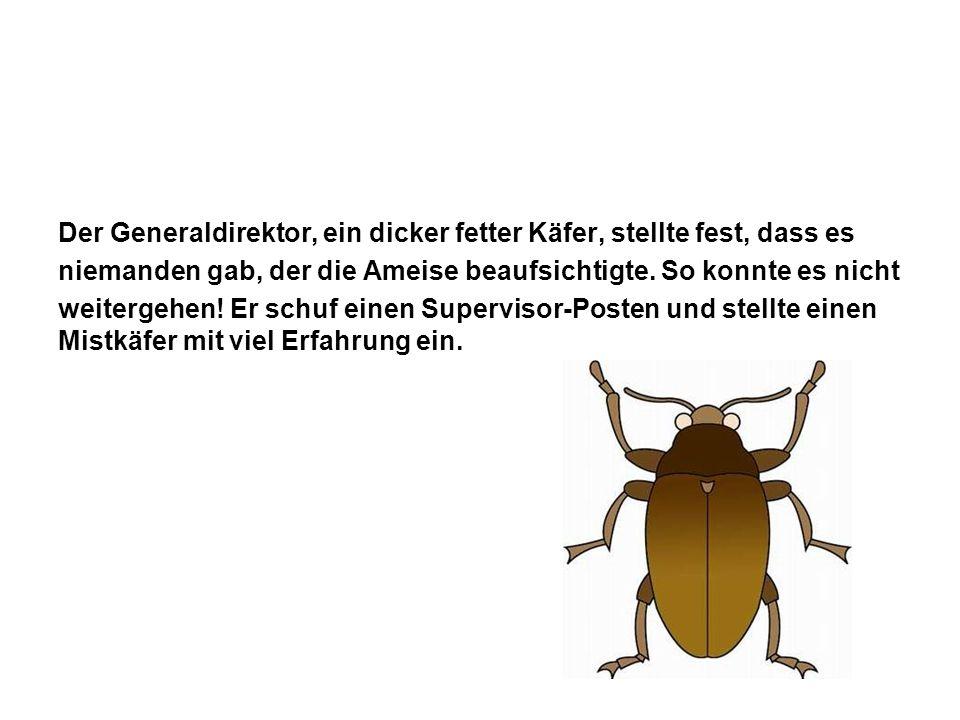Der Generaldirektor, ein dicker fetter Käfer, stellte fest, dass es