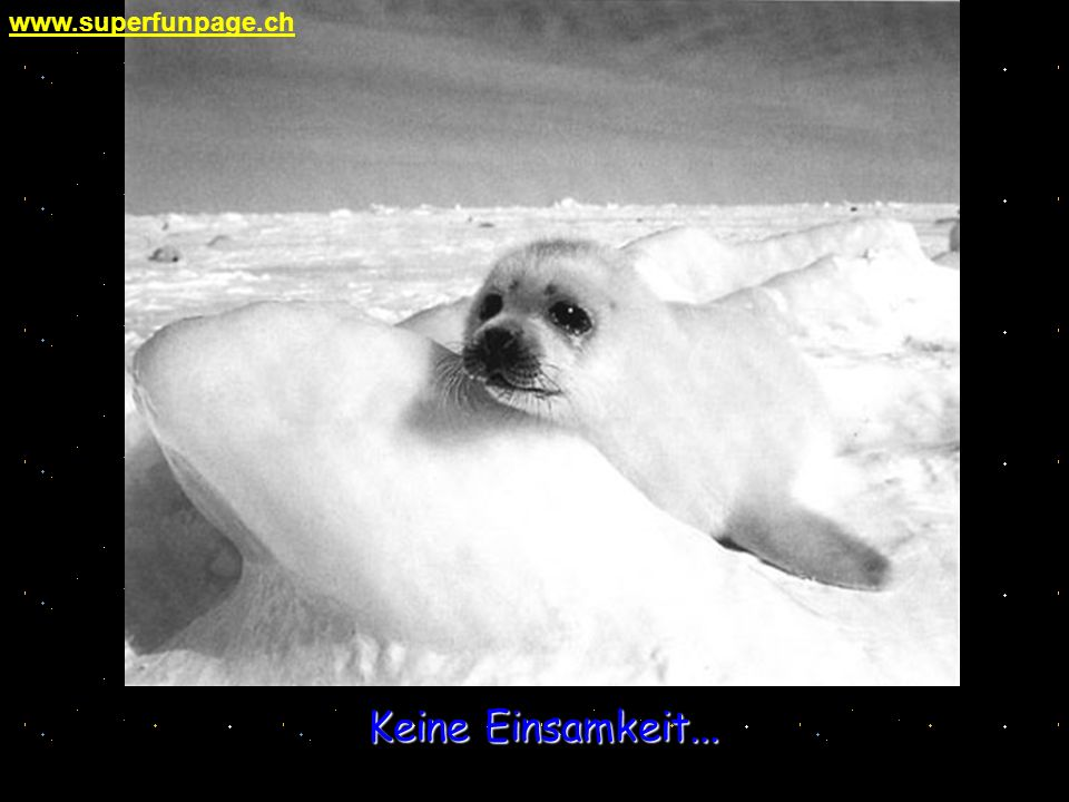 www.superfunpage.ch Keine Einsamkeit...