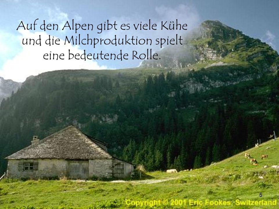 Auf den Alpen gibt es viele Kühe und die Milchproduktion spielt eine bedeutende Rolle.