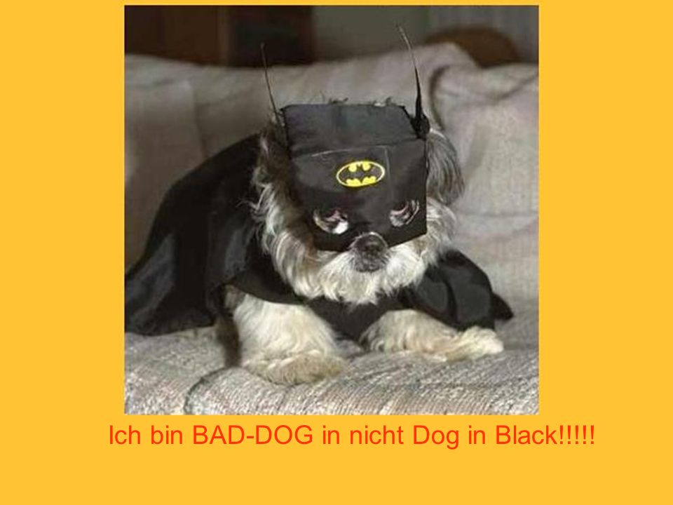 Ich bin BAD-DOG in nicht Dog in Black!!!!!