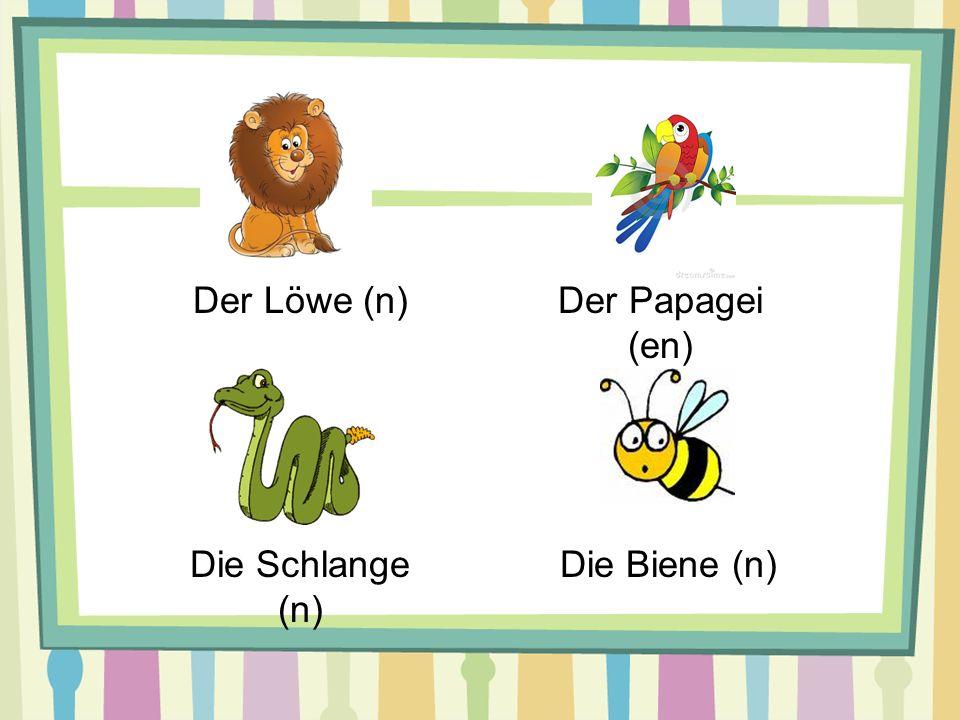 Der Löwe (n) Der Papagei (en) Die Schlange (n) Die Biene (n)