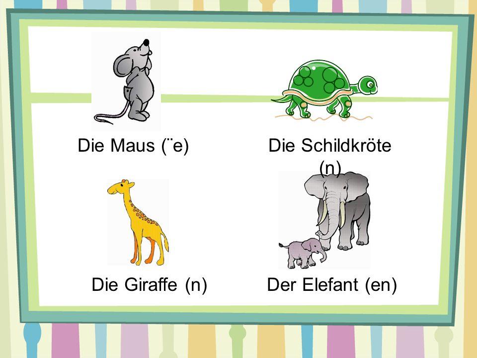 Die Maus (¨e) Die Schildkröte (n) Die Giraffe (n) Der Elefant (en)