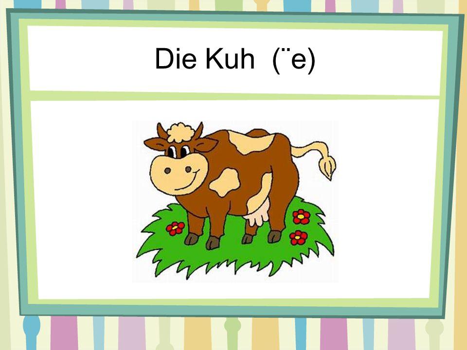 Die Kuh (¨e)