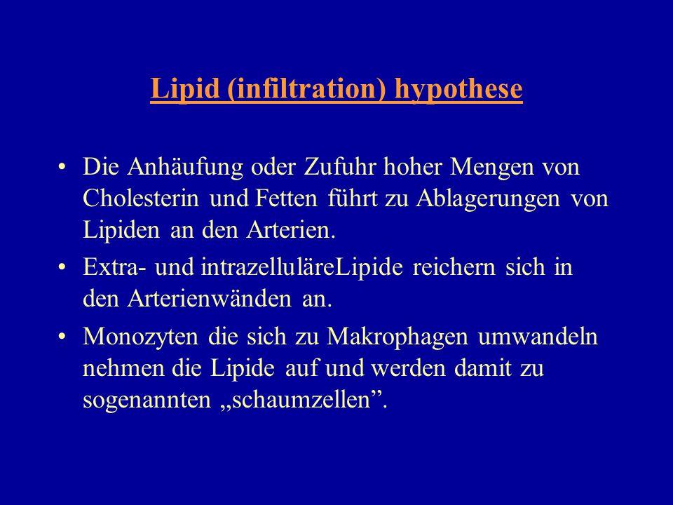Lipid (infiltration) hypothese