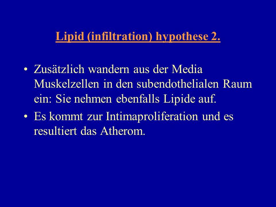 Lipid (infiltration) hypothese 2.