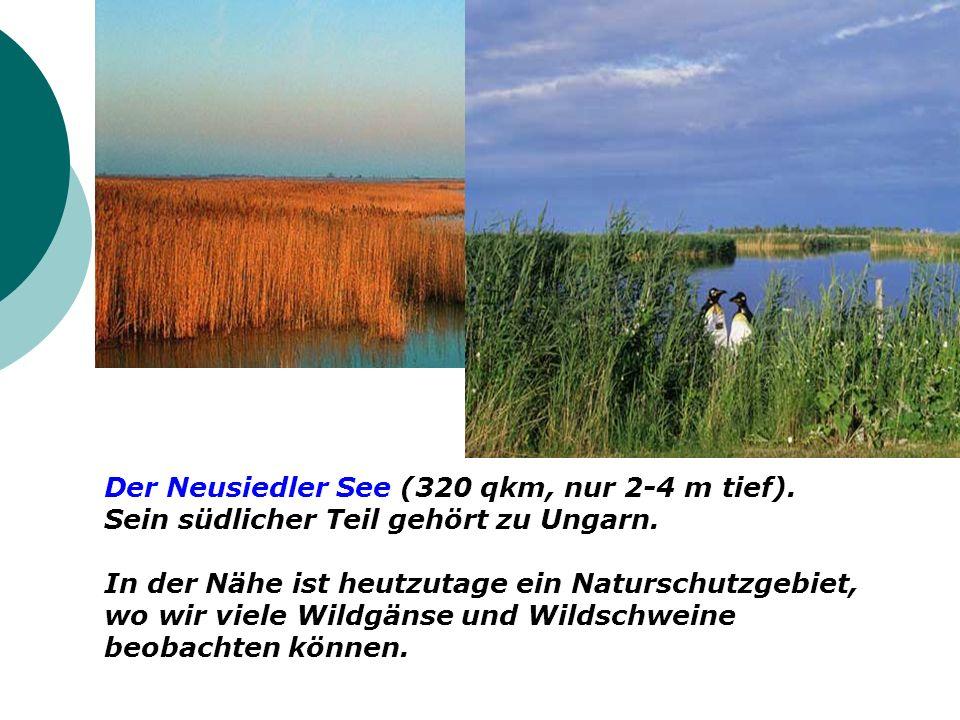 Der Neusiedler See (320 qkm, nur 2-4 m tief).