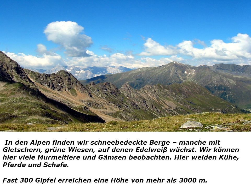 In den Alpen finden wir schneebedeckte Berge – manche mit Gletschern, grüne Wiesen, auf denen Edelweiβ wächst. Wir können hier viele Murmeltiere und Gämsen beobachten. Hier weiden Kühe, Pferde und Schafe.