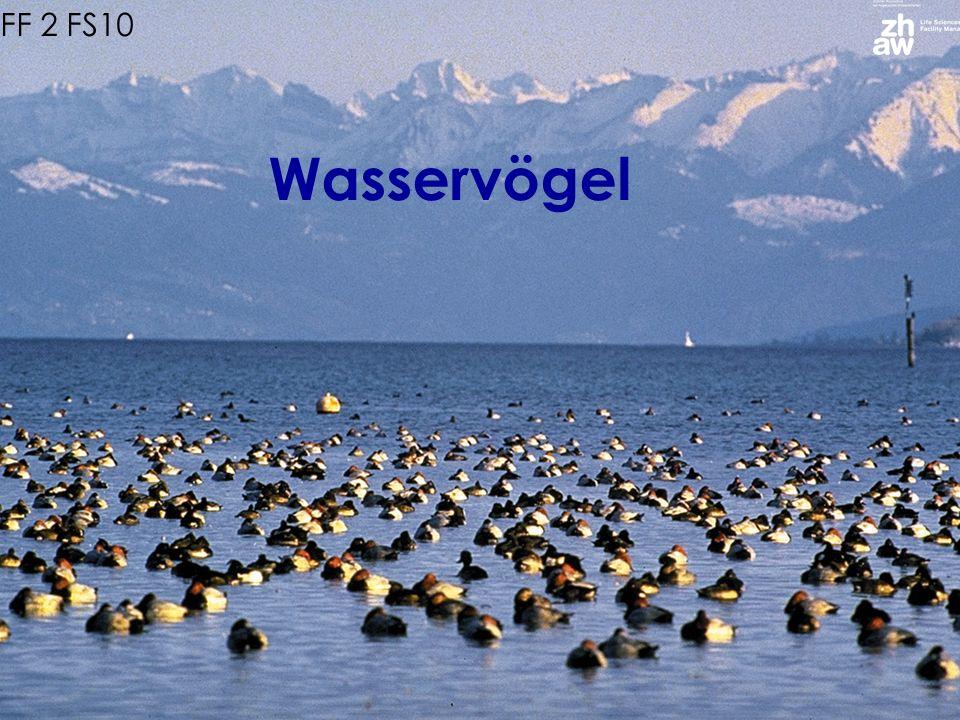 EFF 2 FS10 Wasservögel