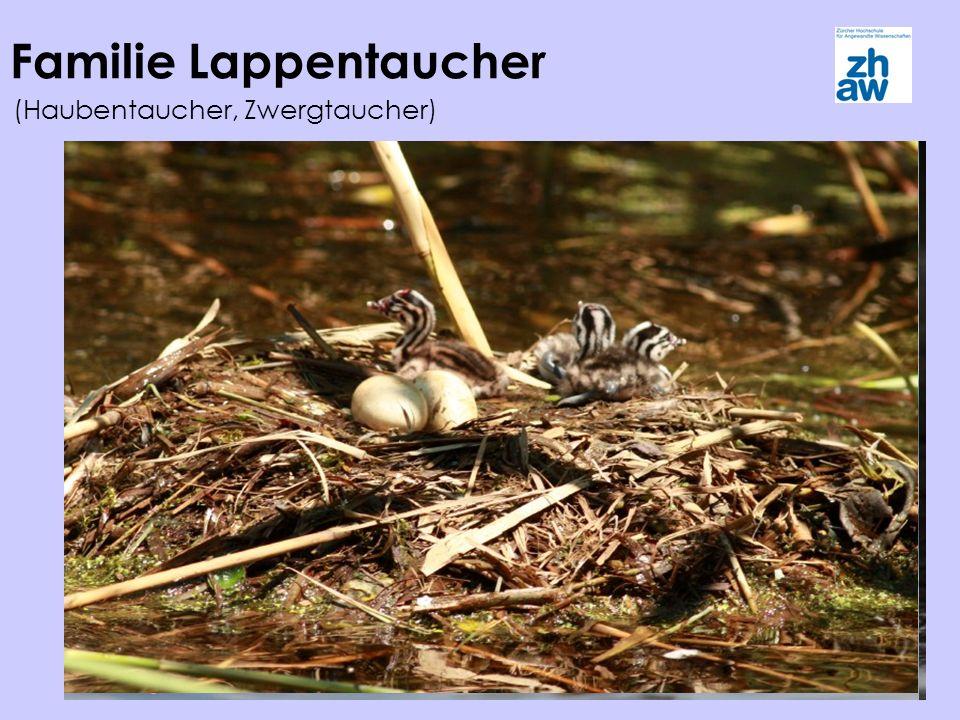 Familie Lappentaucher