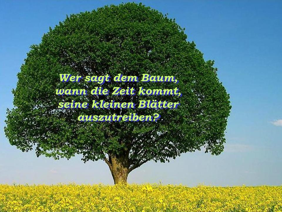 Wer sagt dem Baum, wann die Zeit kommt, seine kleinen Blätter auszutreiben