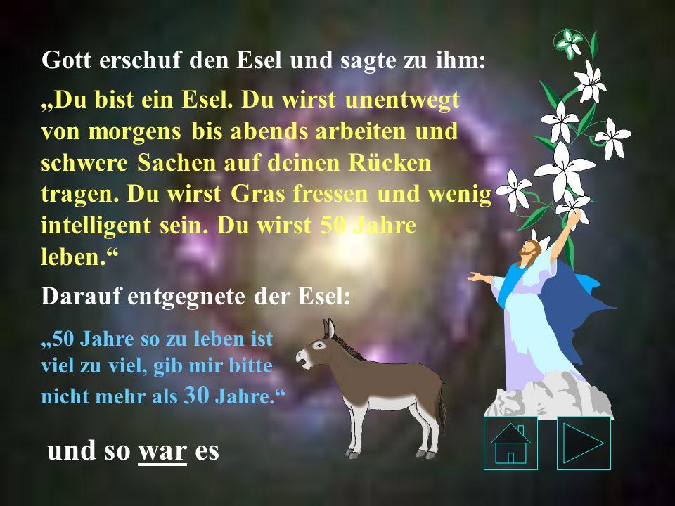 und so war es Gott erschuf den Esel und sagte zu ihm: