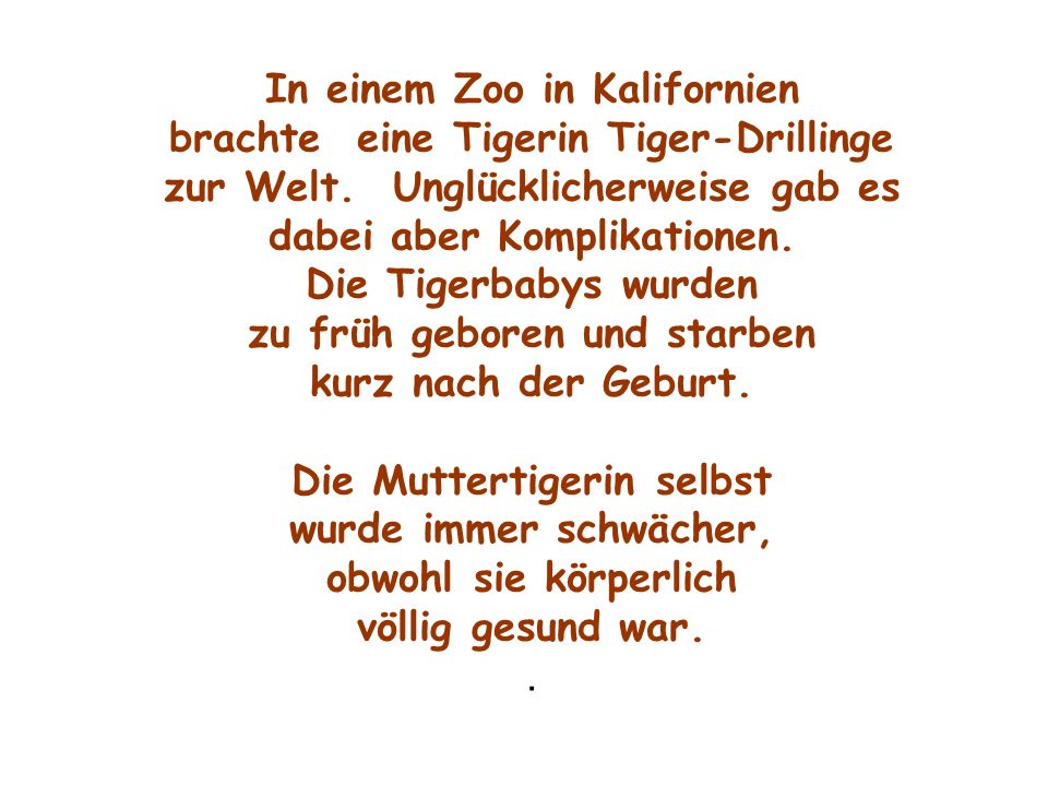 In einem Zoo in Kalifornien brachte eine Tigerin Tiger-Drillinge