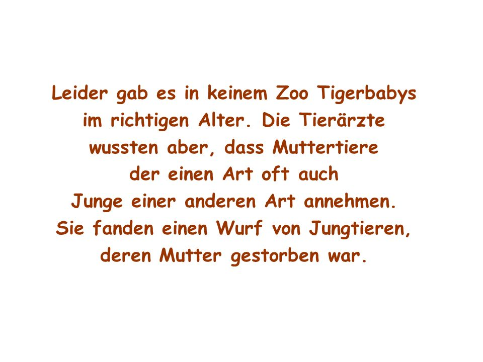 Leider gab es in keinem Zoo Tigerbabys
