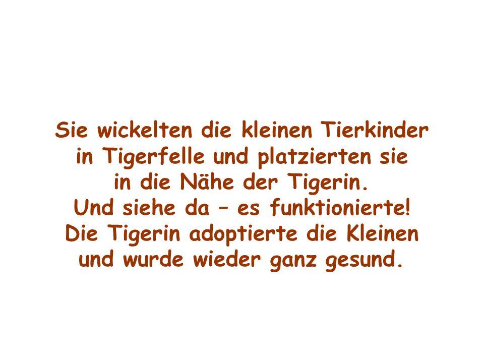 Sie wickelten die kleinen Tierkinder in Tigerfelle und platzierten sie