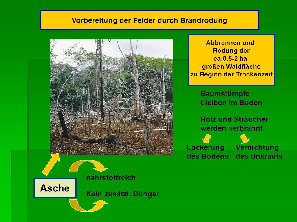 Vorbereitung der Felder durch Brandrodung zu Beginn der Trockenzeit