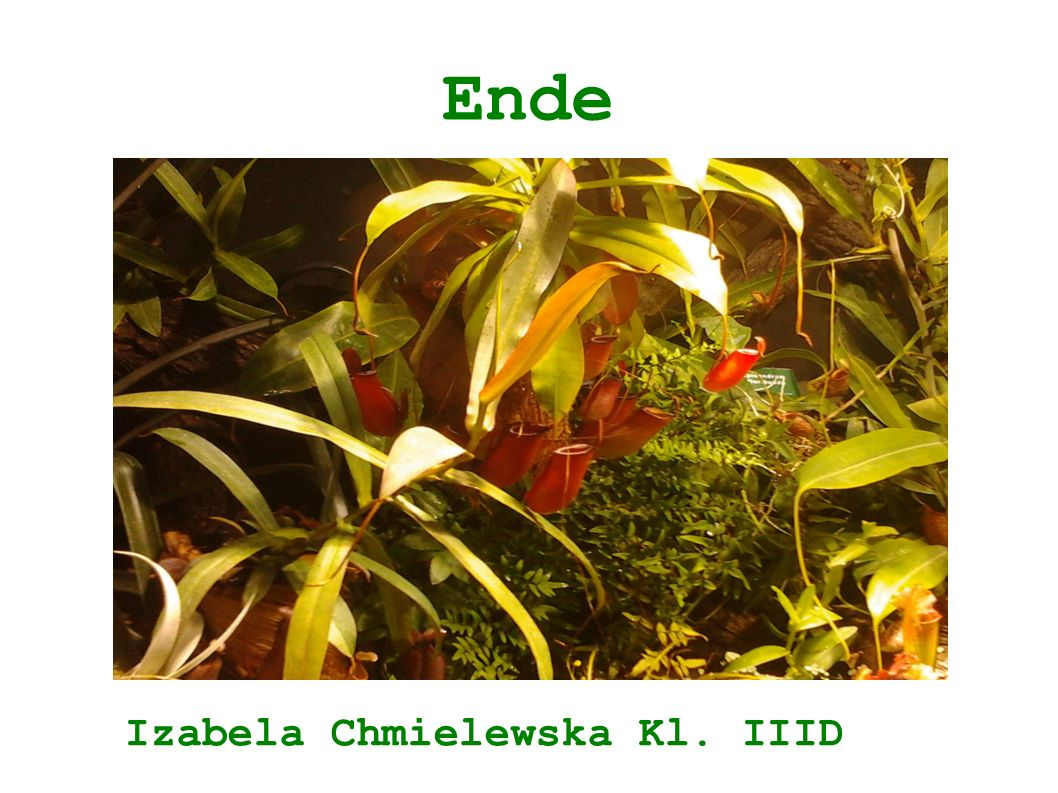 Ende Izabela Chmielewska Kl. IIID